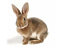 """Премикс """"ШенМикс Раббит ПРО"""" 2,5% кролики с пробитиком"""