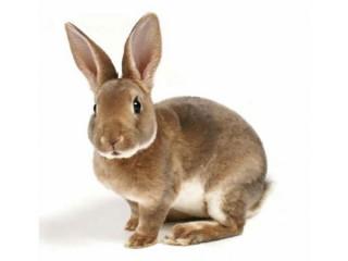 Комбикорм для кроликов с сенной мукой