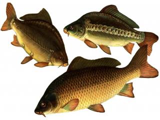 """Премикс """"ШенМикс Фиш"""" 2% промысловая рыба"""