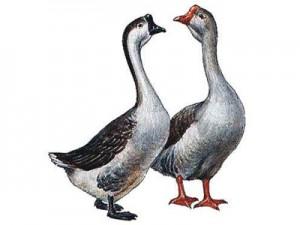 Комбикорм откорм водоплавающей птицы (утки, гуси) 4 недели и старше (СП 18%)